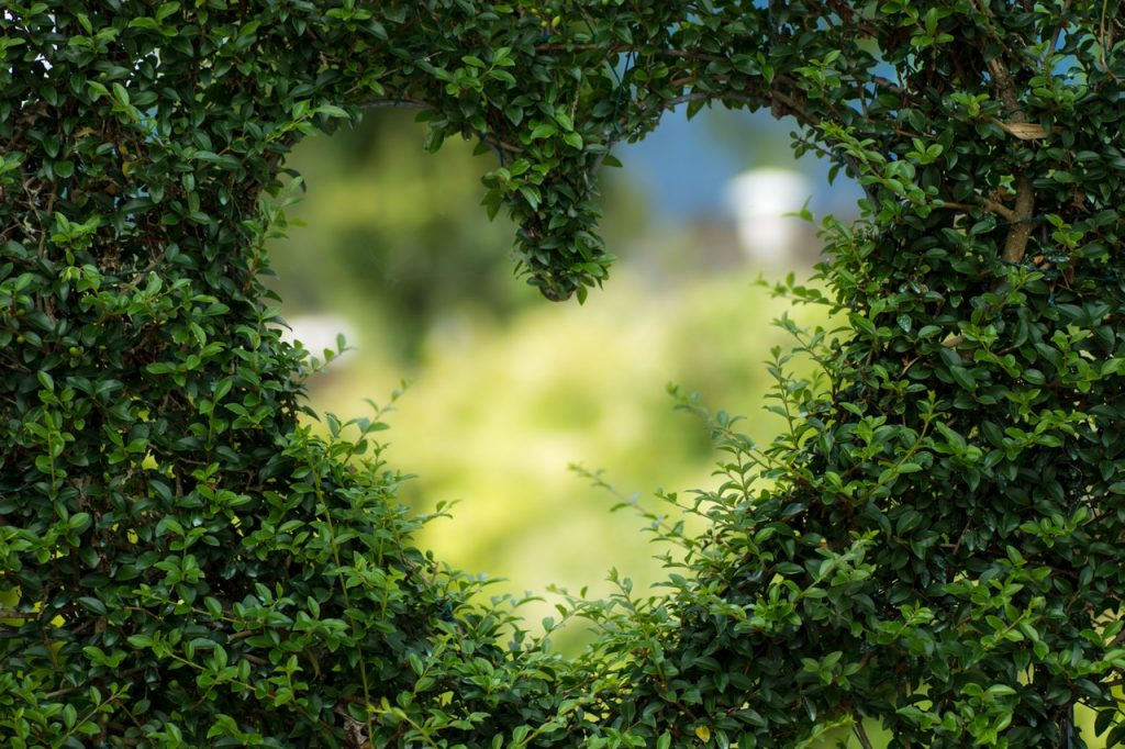 heart in shrub